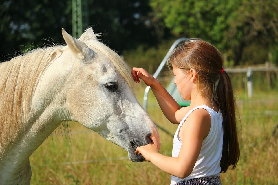 Psychologue, Psychologie avec le cheval, thérapeute, équithérapeute… comment s'y retrouver?
